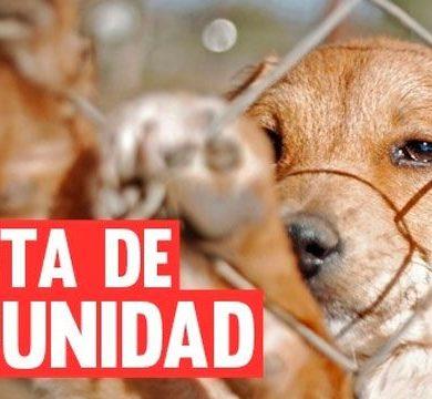 Proyecto de Ley penaliza el maltrato animal.