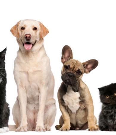 Mascotas: Atención gratuita en la Plaza Uruguaya.
