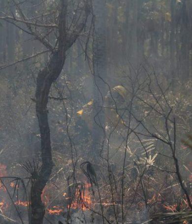 Incendios afectaron 80% del Pantanal